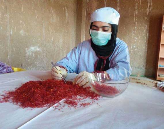 Donna afghana prepara lo zafferano. Il progetto Giallo fiducia è promosso da CISDA (Coordinamento Italiano Sostegno Donne Afgane)